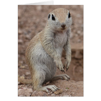 Sad Squirrel Greeting Card