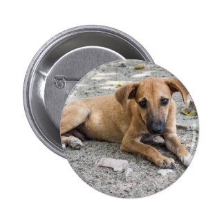 Sad Stray Dog Canine 6 Cm Round Badge