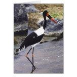 Saddle Billed Stork Cards