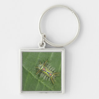 Saddleback moth, Acharia sp., poisonous Silver-Colored Square Key Ring