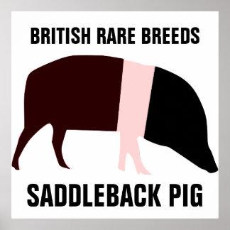 Saddleback Pig Poster