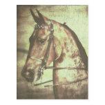 Saddlebred Horse Postcards