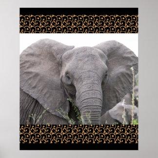 Safari Africa Mod Chic Classy  Destiny Elephant Poster