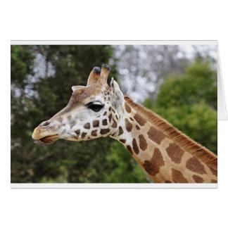 Safari Africa Mod Chic Classy  Destiny Giraffe Card