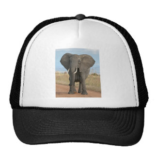 Safari African Jungle Destiny Animals Elephants Cap