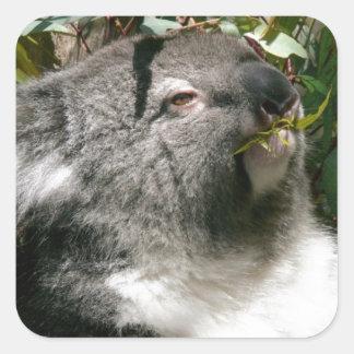 Safari Aussi Cute Adorable Destiny Koala Bear Square Sticker