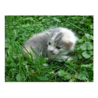 Safari Kitten Post Card