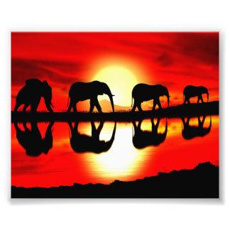 safari photo print