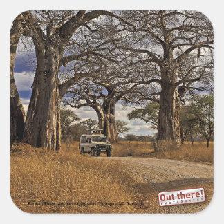 Safari Square Stickers