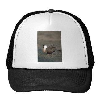Sage grouse strutting mesh hat