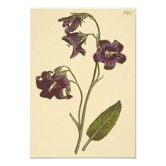 Sage Leaved Bellflower Botanical Illustration Card