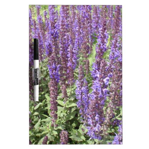 Sage Salvia Nemorosa Ostfriesland Dry-Erase Boards