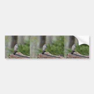 Sage sparrow bumper sticker