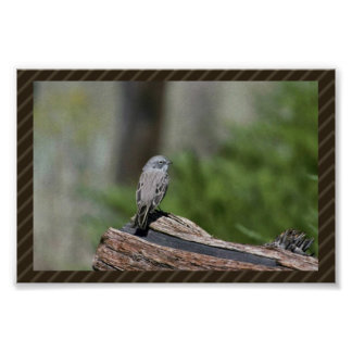 Sage sparrow poster