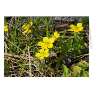 Sagebrush Buttercup Card