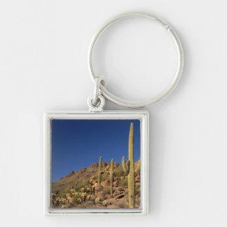 Saguaro cacti and Tucson Mountains, Tucson Key Ring