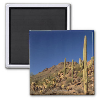Saguaro cacti and Tucson Mountains, Tucson Square Magnet