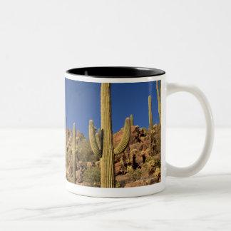 Saguaro cacti and Tucson Mountains, Tucson Two-Tone Coffee Mug