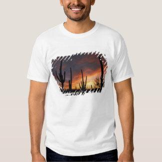 saguaro cacti, Carnegiea gigantea, after Shirts