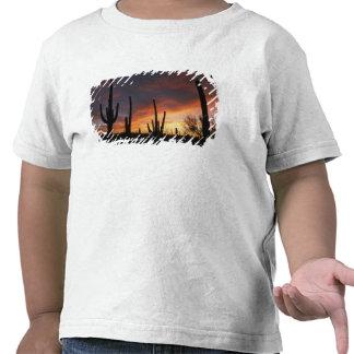 saguaro cacti, Carnegiea gigantea, after T-shirt