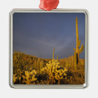 saguaro cacti, Carnegiea gigantea, and teddy Christmas Ornament