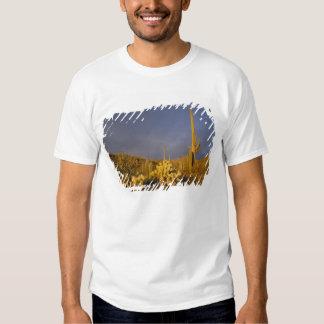 saguaro cacti, Carnegiea gigantea, and teddy Shirts
