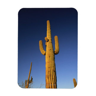 Saguaro cacti rectangular photo magnet