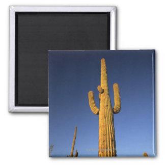 Saguaro cacti square magnet