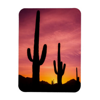 Saguaro cactus at sunrise, Arizona Rectangular Photo Magnet