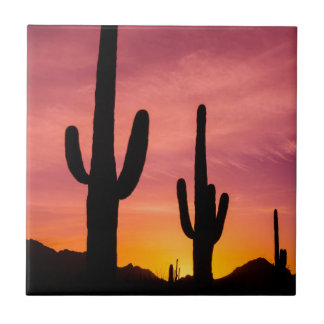 Saguaro cactus at sunrise, Arizona Tile
