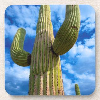 Saguaro cactus portrait, Arizona Coaster