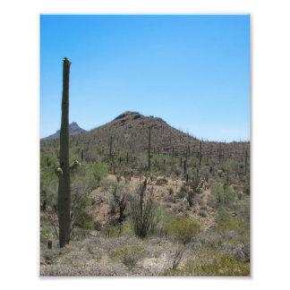 Saguaro Cactus - Sonoran Desert Photo