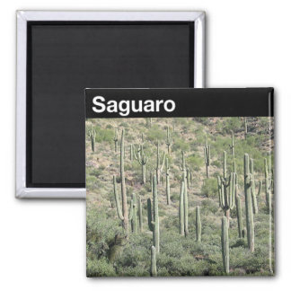 Saguaro National Park Square Magnet