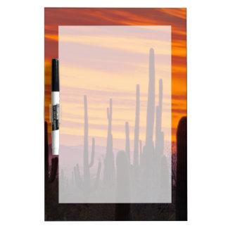 Saguaro, sunset, Saguaro National Park Dry Erase Whiteboards