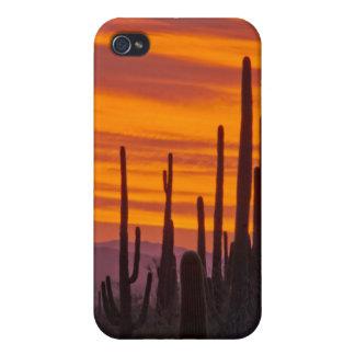 Saguaro, sunset, Saguaro National Park iPhone 4/4S Cases