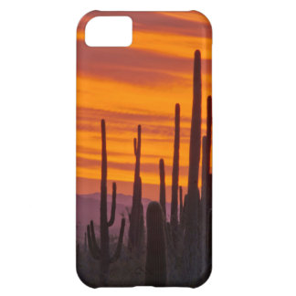 Saguaro, sunset, Saguaro National Park iPhone 5C Case