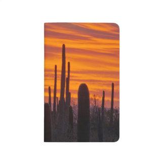 Saguaro, sunset, Saguaro National Park Journal