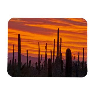 Saguaro, sunset, Saguaro National Park Rectangular Photo Magnet