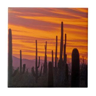 Saguaro, sunset, Saguaro National Park Small Square Tile