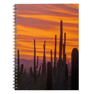 Saguaro, sunset, Saguaro National Park Spiral Note Book