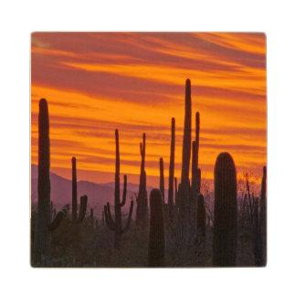 Saguaro, sunset, Saguaro National Park Wood Coaster