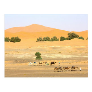 Sahara Desert - Camels and Erg Chebbi Postcard