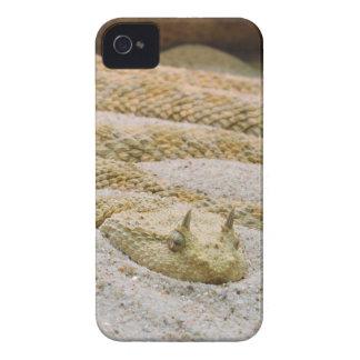 Saharan Horned Desert Viper Cerastes Cerastes iPhone 4 Cover