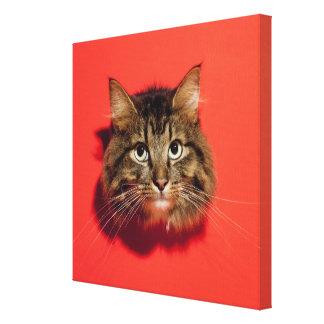 Saiberian cat canvas print