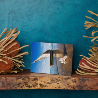 Sail Boat And Shell | Mozambique, Benguerra Lodge Display Plaque