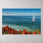 Sailing La Jolla Shores Poster
