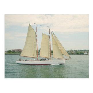 Sailing Sailboats Postcard