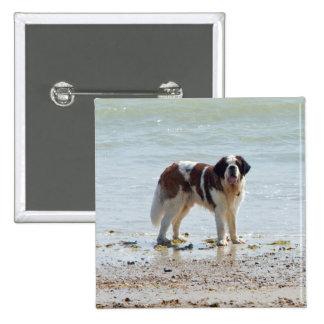 Saint Bernard dog at the beach button, pin, gift