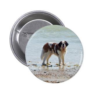 Saint Bernard dog at the beach button pin gift