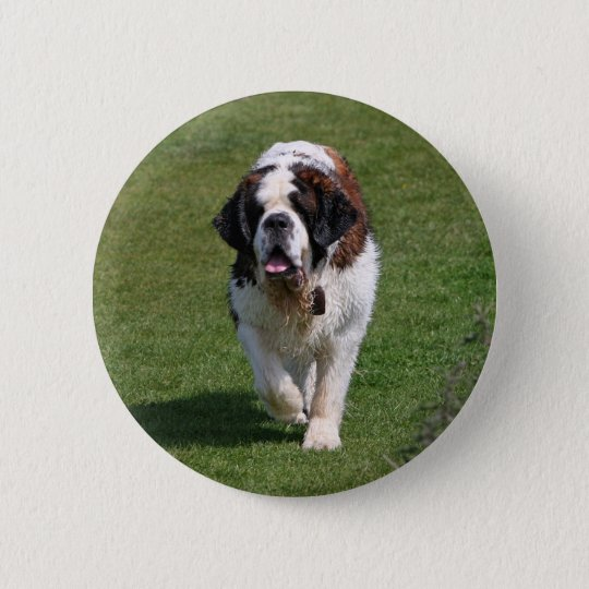 Saint Bernard dog beautiful photo button, pin